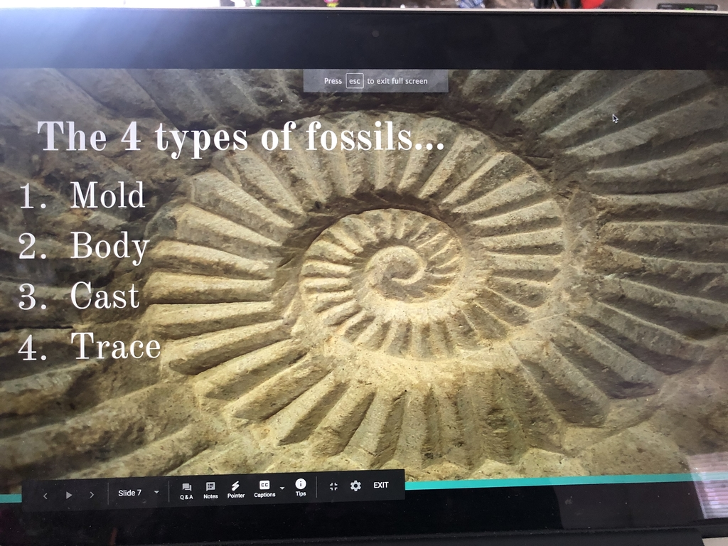 4 types of fossils
